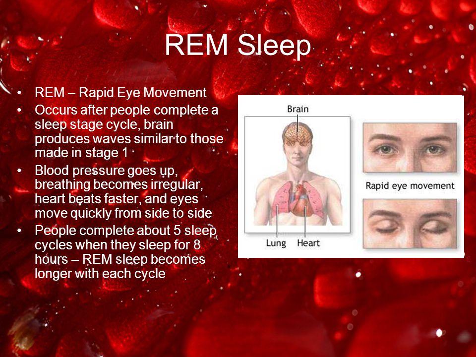 REM Sleep REM – Rapid Eye Movement