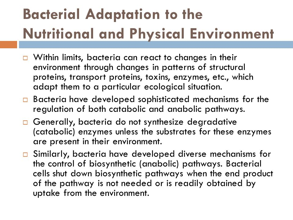 Bacterial Adaptation to the Nutritional and Physical Environment