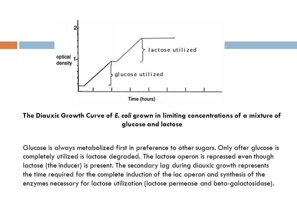The Diauxic Growth Curve of E