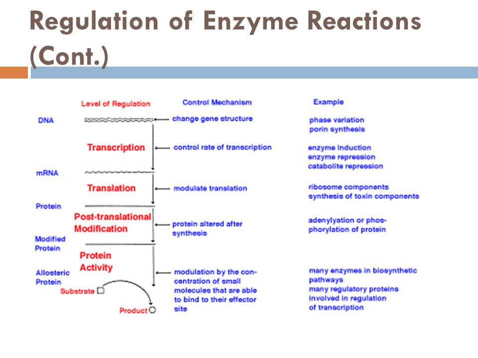 Regulation of Enzyme Reactions (Cont.)