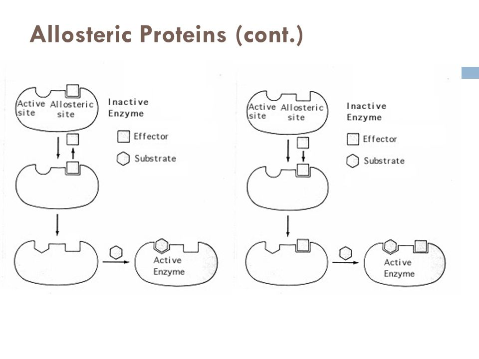 Allosteric Proteins (cont.)