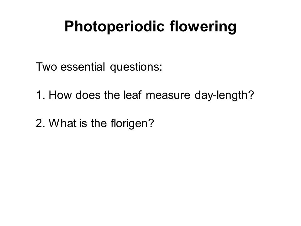 Photoperiodic flowering