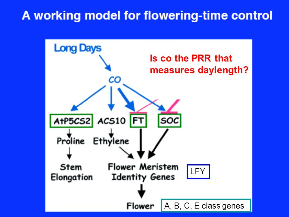 Is co the PRR that measures daylength