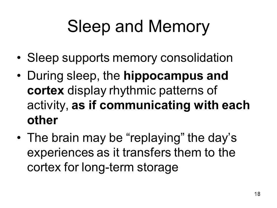 Sleep and Memory Sleep supports memory consolidation