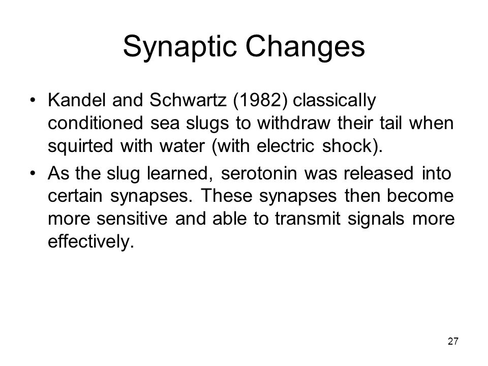 Synaptic Changes Kandel and Schwartz (1982) classically conditioned sea slugs to withdraw their tail when squirted with water (with electric shock).