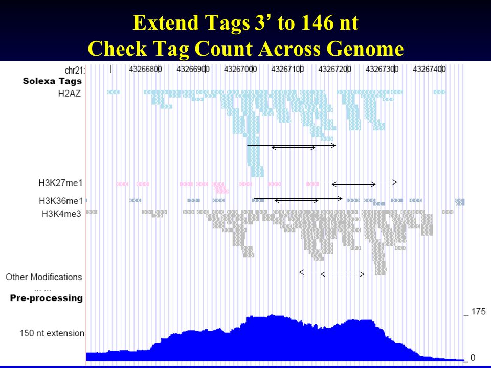 Extend Tags 3' to 146 nt Check Tag Count Across Genome
