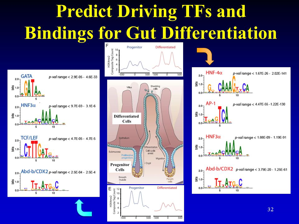 Predict Driving TFs and Bindings for Gut Differentiation