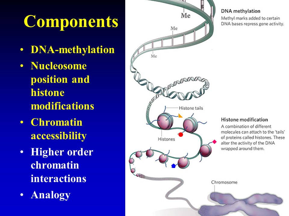 Components DNA-methylation