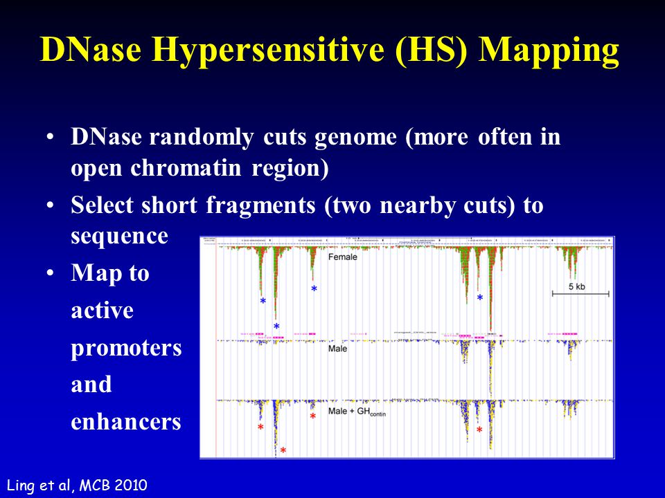DNase Hypersensitive (HS) Mapping
