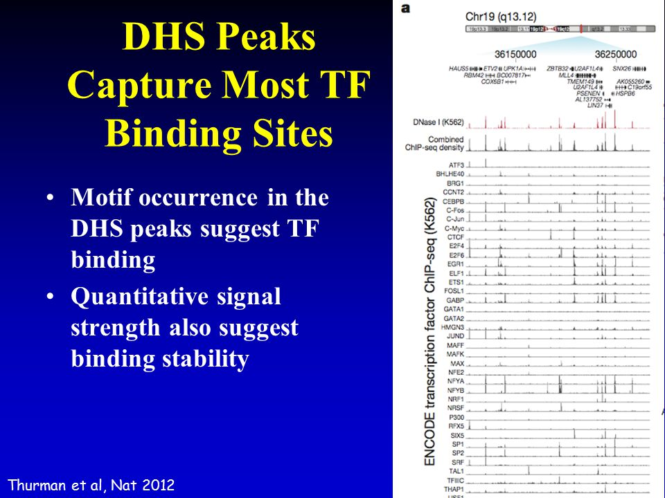 DHS Peaks Capture Most TF Binding Sites