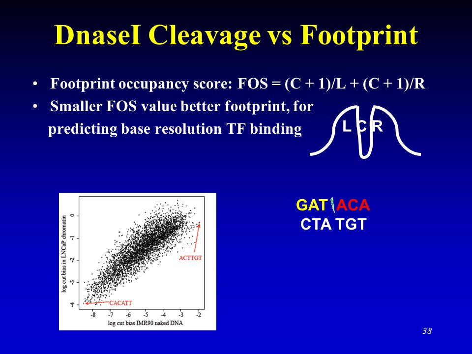 DnaseI Cleavage vs Footprint