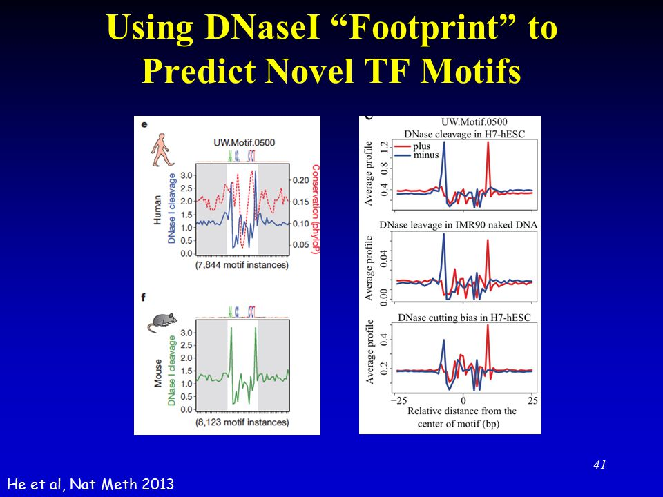 Using DNaseI Footprint to Predict Novel TF Motifs