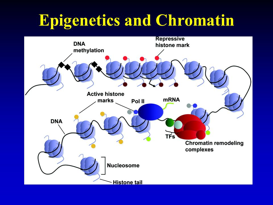 Epigenetics and Chromatin