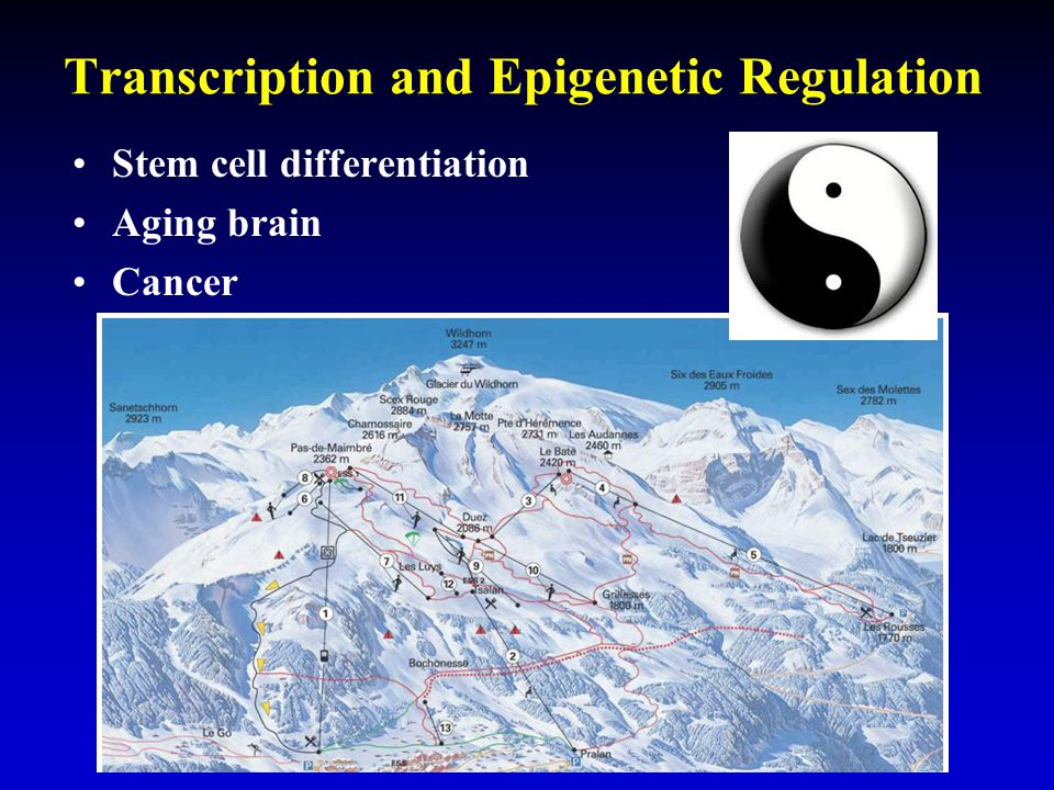 Transcription and Epigenetic Regulation