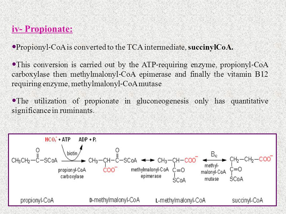 iv- Propionate: Propionyl‐CoA is converted to the TCA intermediate, succinylCoA.
