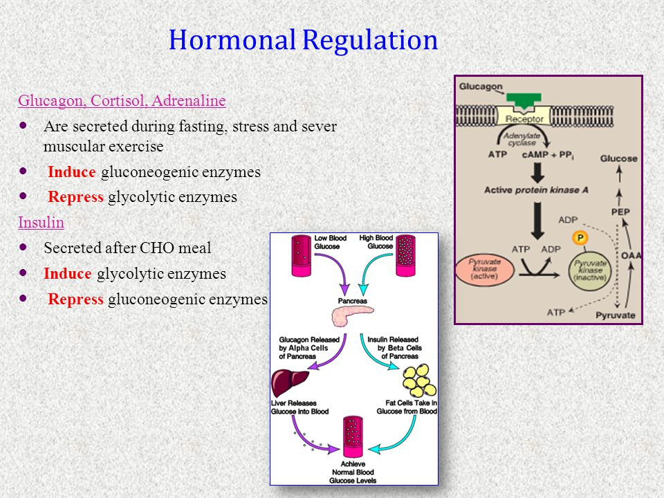 Hormonal Regulation Glucagon, Cortisol, Adrenaline