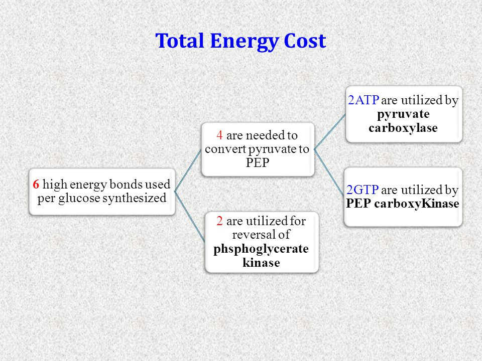 Total Energy Cost 6 high energy bonds used per glucose synthesized