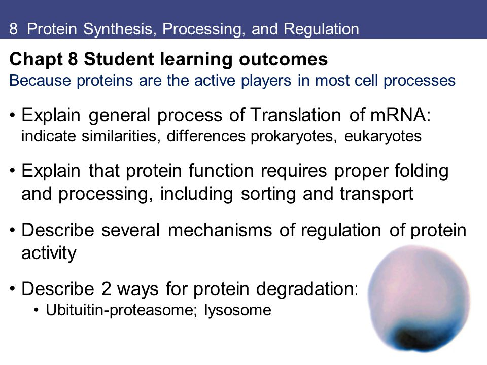 8 Protein Synthesis, Processing, and Regulation