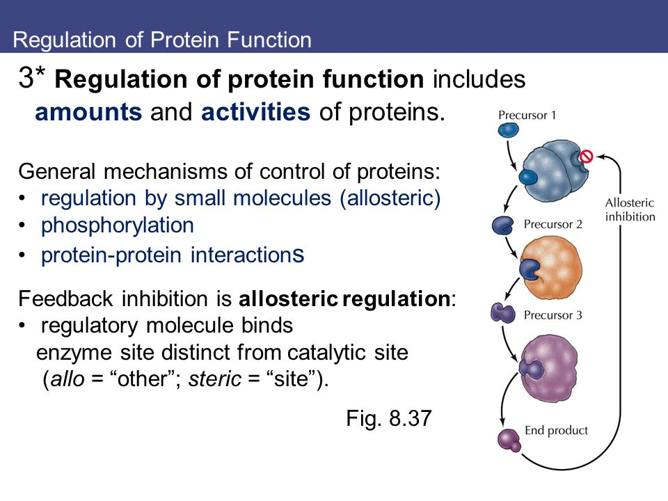 protein synthesis notes Prokaryotic translation (protein synthesis) translation involves translating the sequence of a messenger rna (mrna) molecule to a sequence of amino acids during protein synthesis it is the process in which ribosomes in the cytoplasm or er synthesize proteins after the process of transcription of dna to rna.