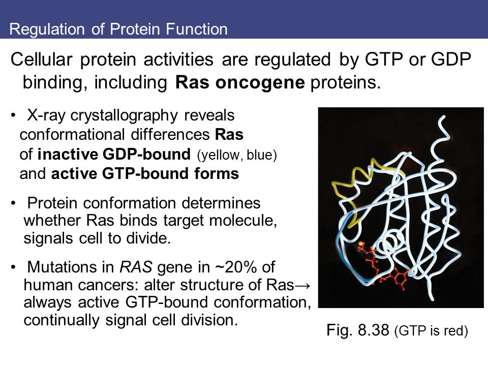 Regulation of Protein Function