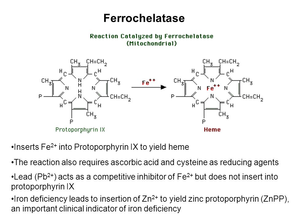 Ferrochelatase Inserts Fe2+ into Protoporphyrin IX to yield heme