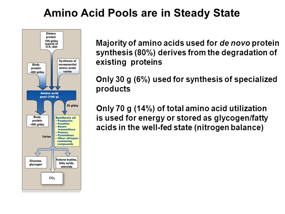 Amino Acid Pools are in Steady State