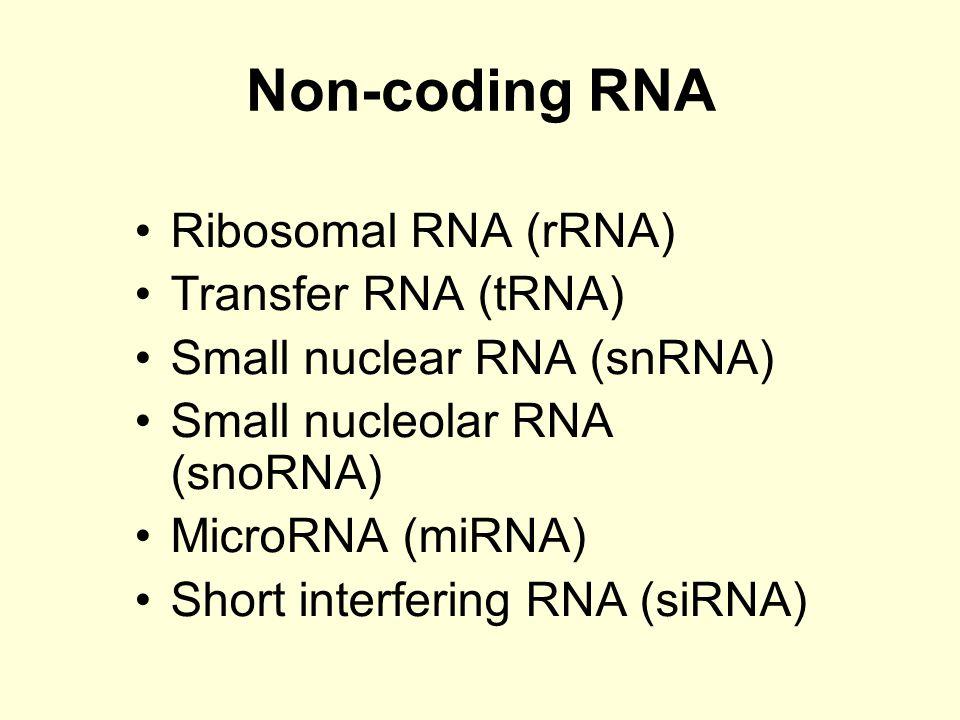 Non-coding RNA Ribosomal RNA (rRNA) Transfer RNA (tRNA)