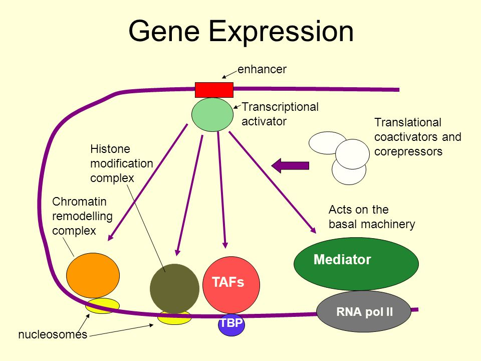 Gene Expression Mediator TAFs enhancer Transcriptional activator