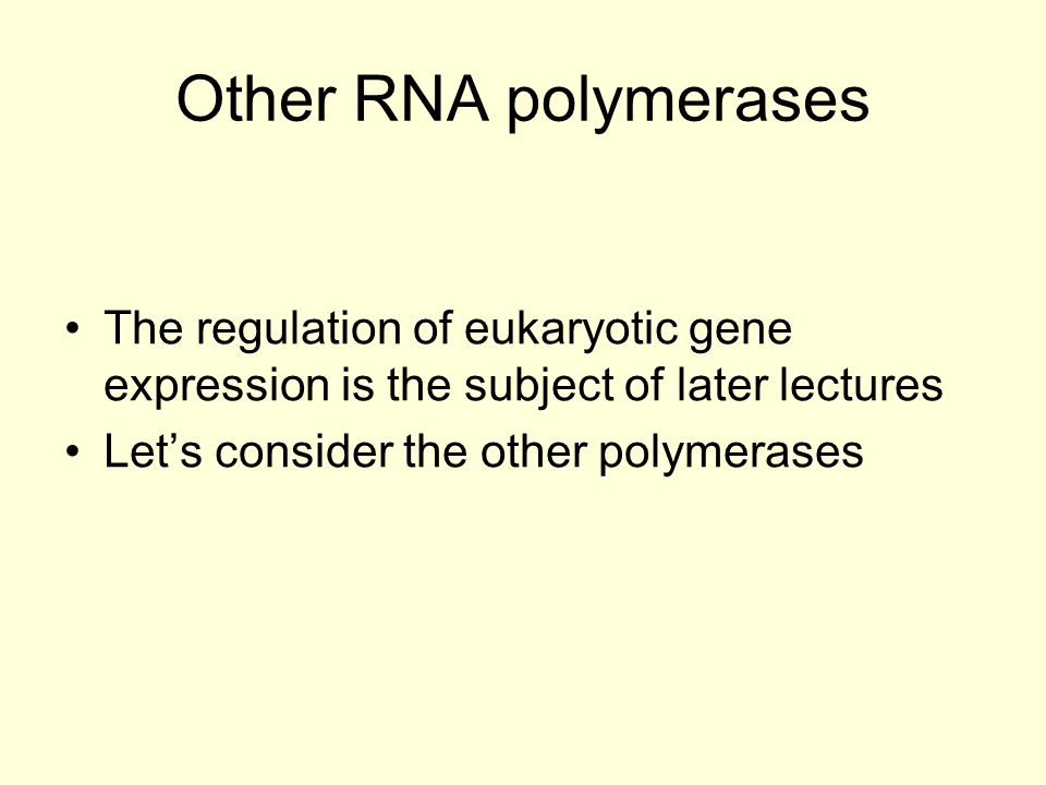 Other RNA polymerases The regulation of eukaryotic gene expression is the subject of later lectures.