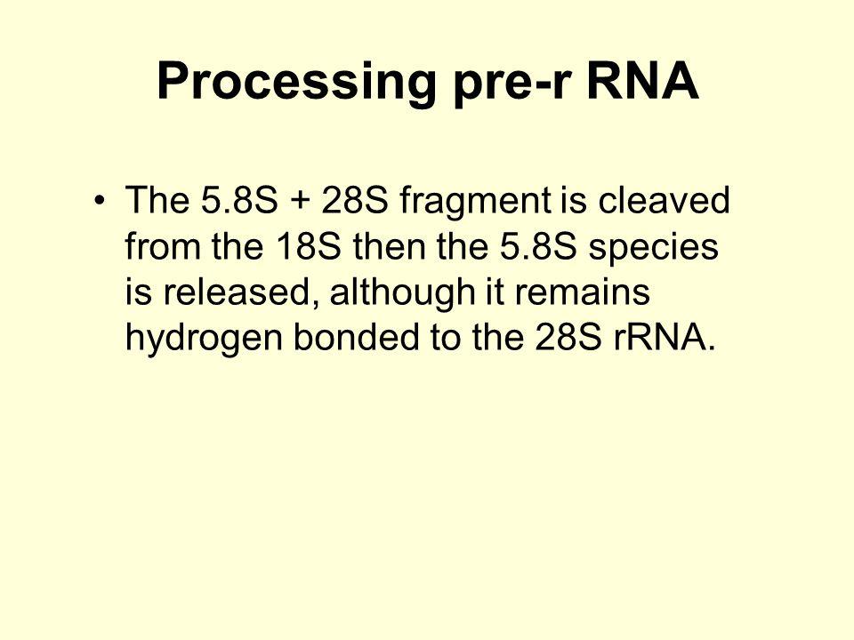 Processing pre-r RNA