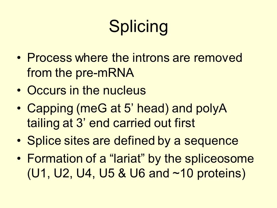 Splicing Process where the introns are removed from the pre-mRNA