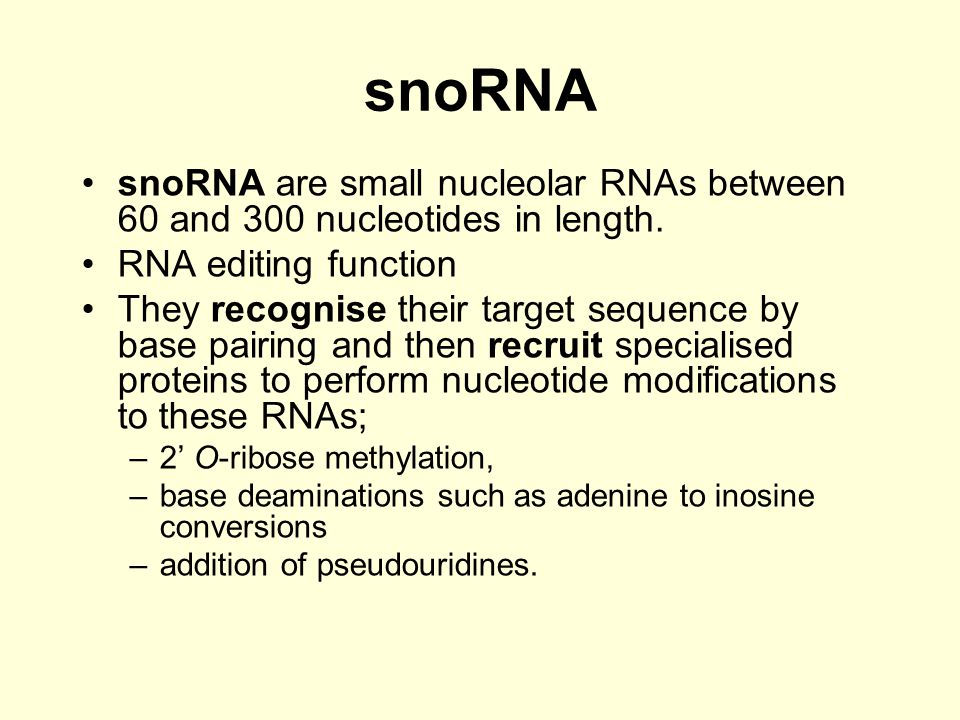snoRNA snoRNA are small nucleolar RNAs between 60 and 300 nucleotides in length. RNA editing function.
