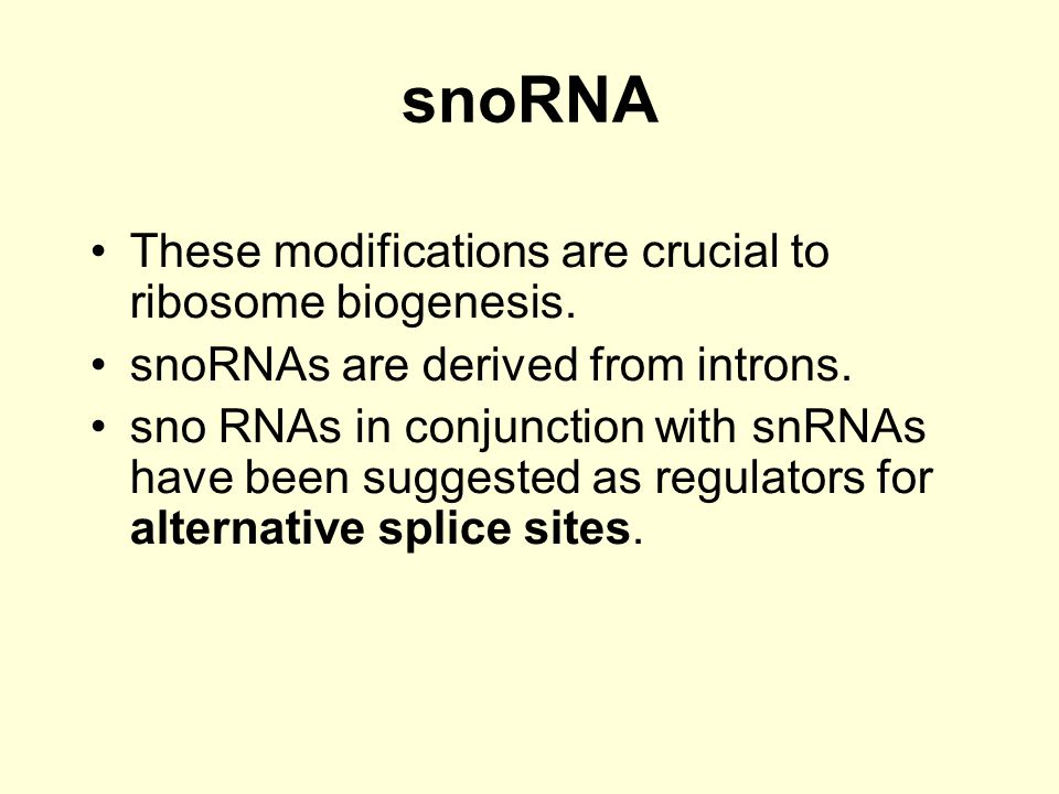 snoRNA These modifications are crucial to ribosome biogenesis.