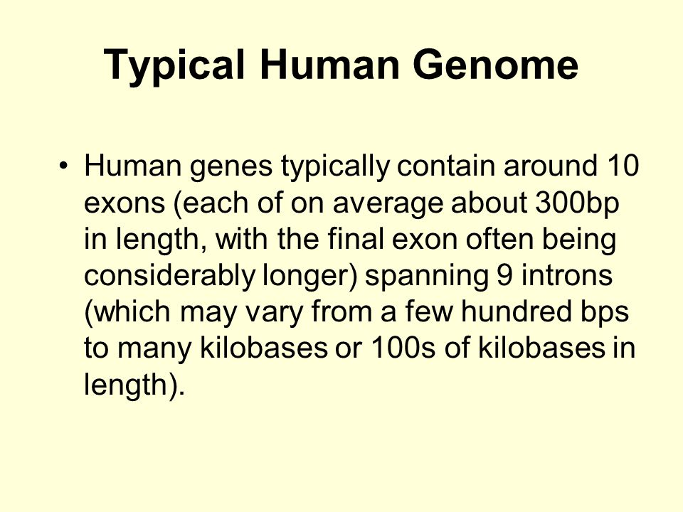 Typical Human Genome