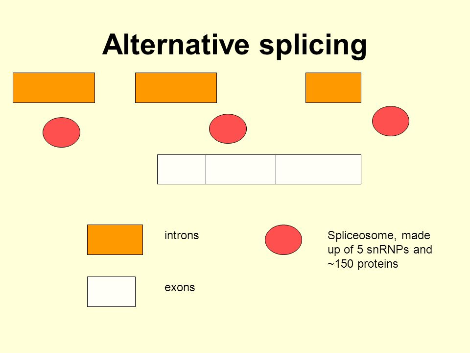 Alternative splicing introns
