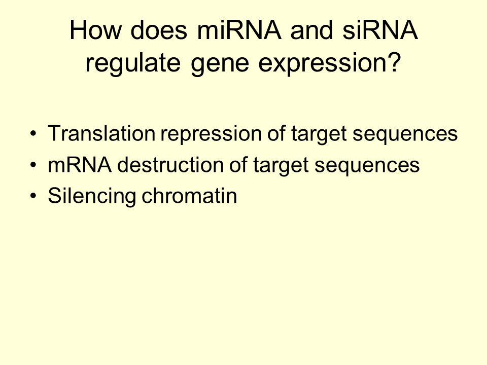 How does miRNA and siRNA regulate gene expression