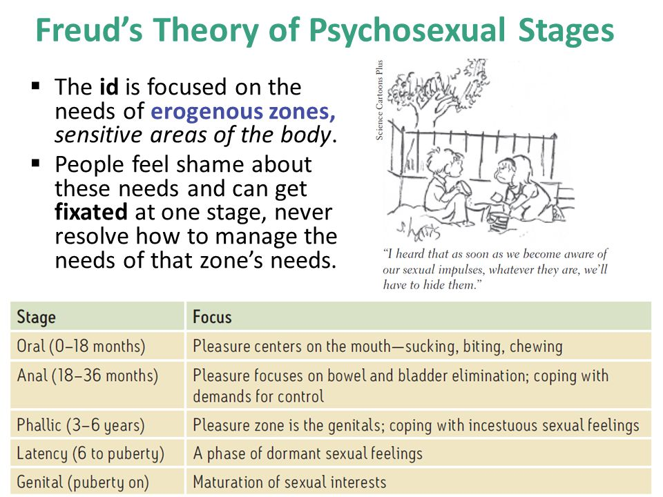 Freud's Theory of Psychosexual Stages
