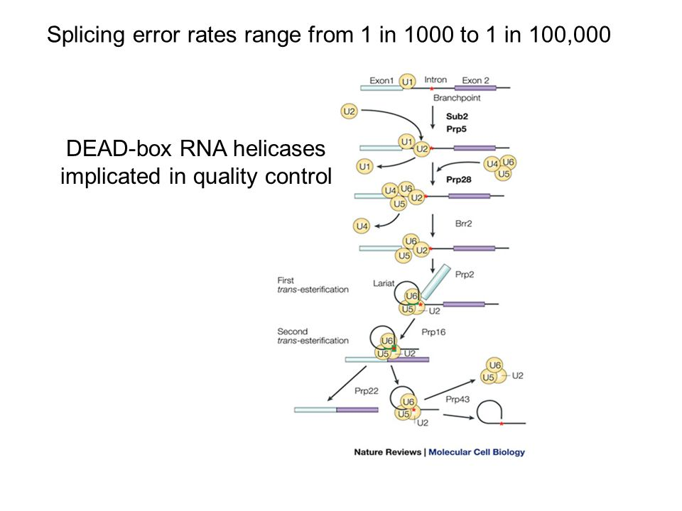 Splicing error rates range from 1 in 1000 to 1 in 100,000