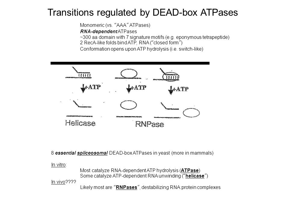 Transitions regulated by DEAD-box ATPases