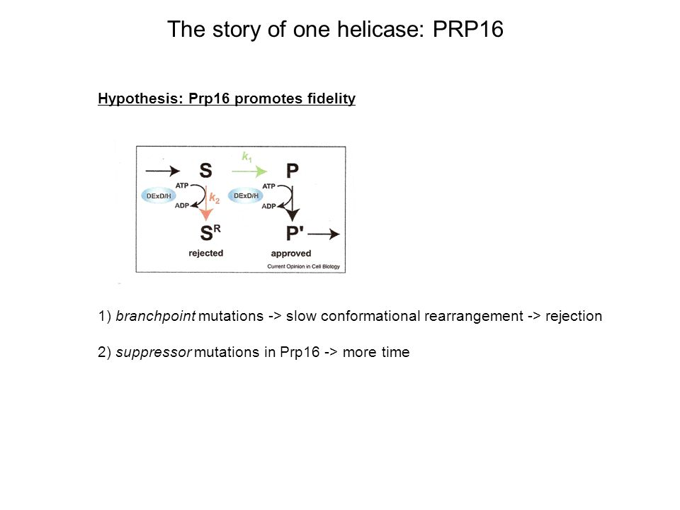 The story of one helicase: PRP16