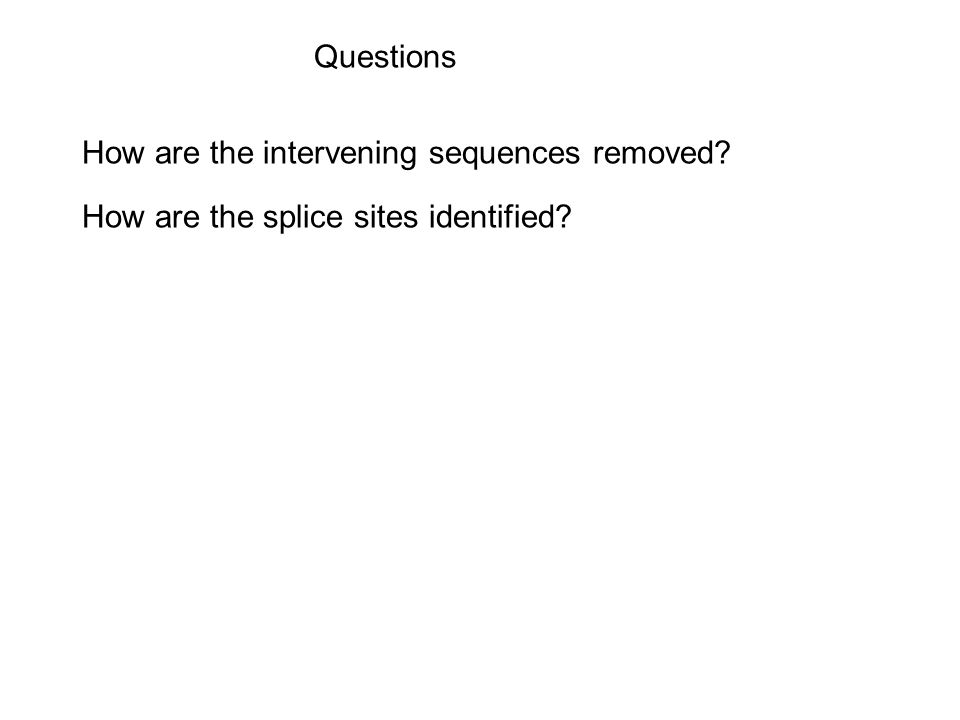 Questions How are the intervening sequences removed How are the splice sites identified