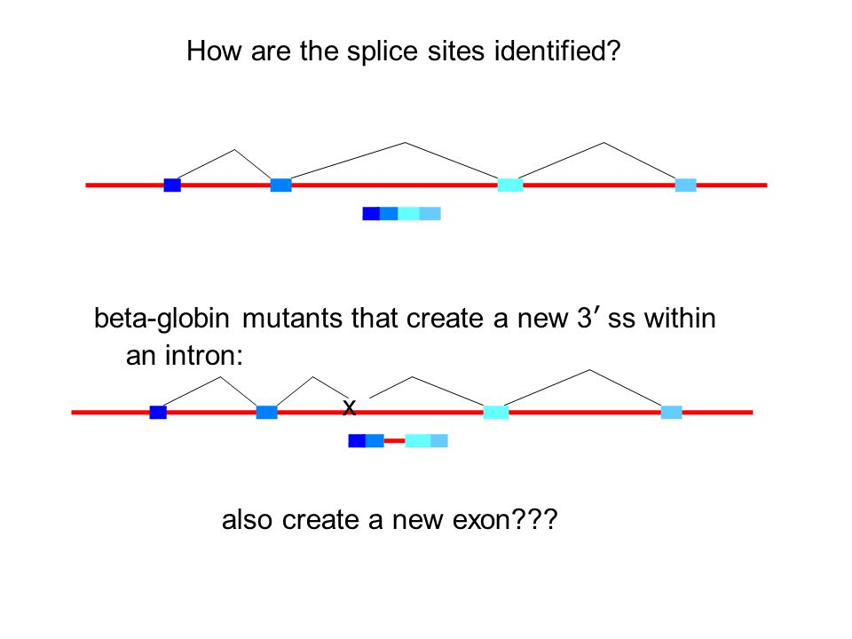 How are the splice sites identified