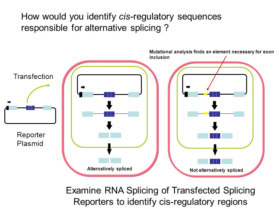 How would you identify cis-regulatory sequences responsible for alternative splicing
