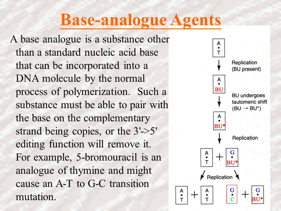 Base-analogue Agents