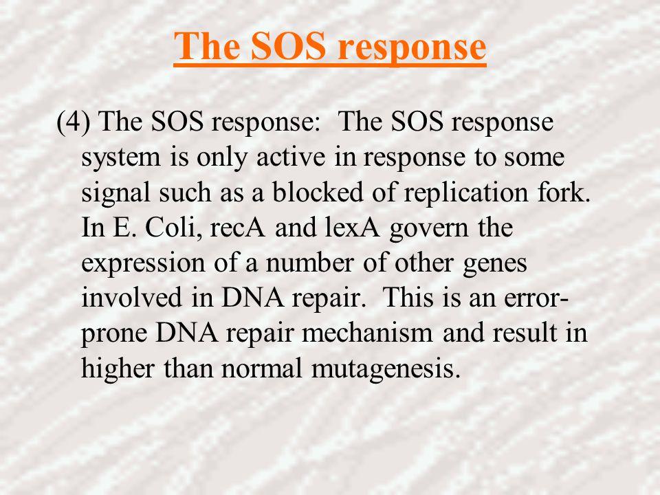 The SOS response