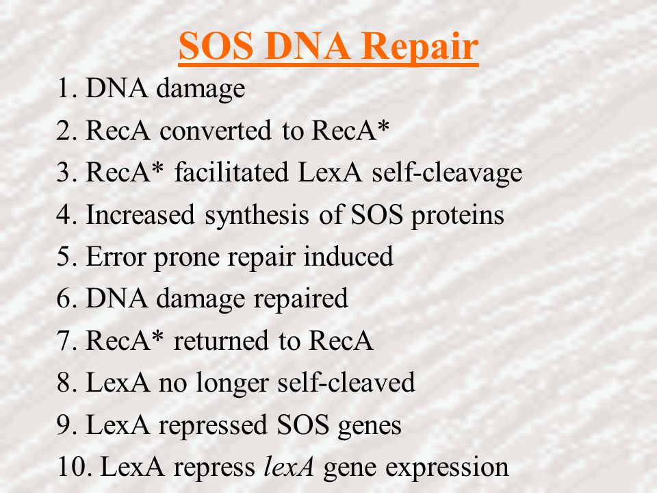 SOS DNA Repair 1. DNA damage 2. RecA converted to RecA*
