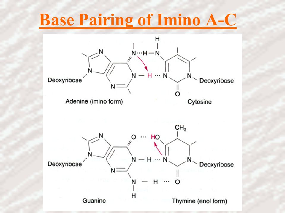 Base Pairing of Imino A-C