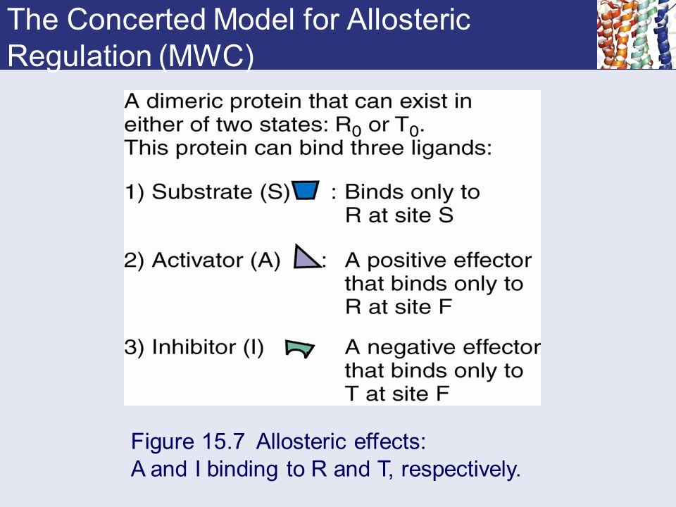 The Concerted Model for Allosteric Regulation (MWC)