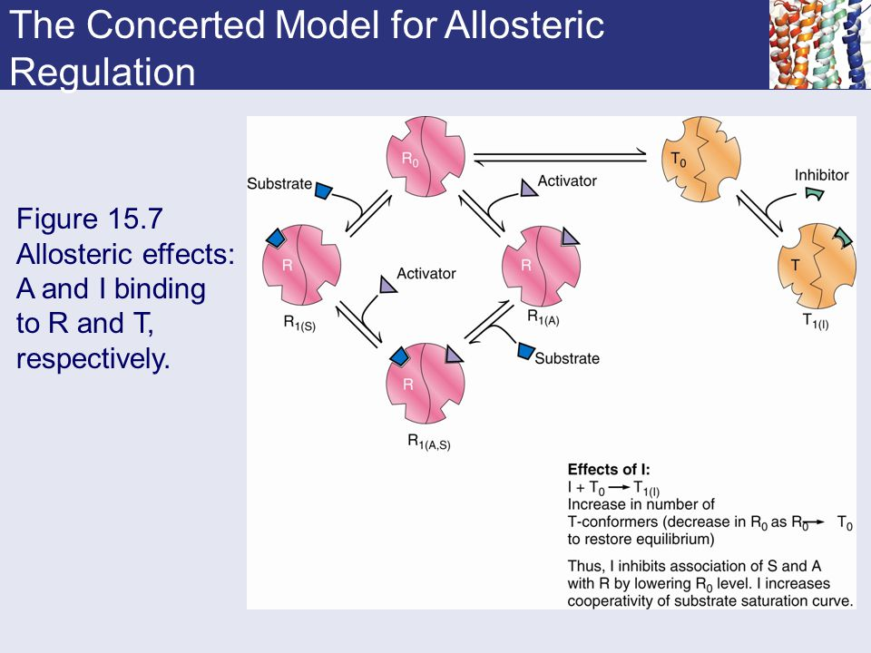 The Concerted Model for Allosteric Regulation