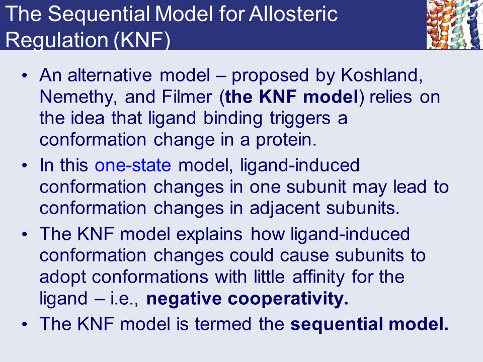 The Sequential Model for Allosteric Regulation (KNF)